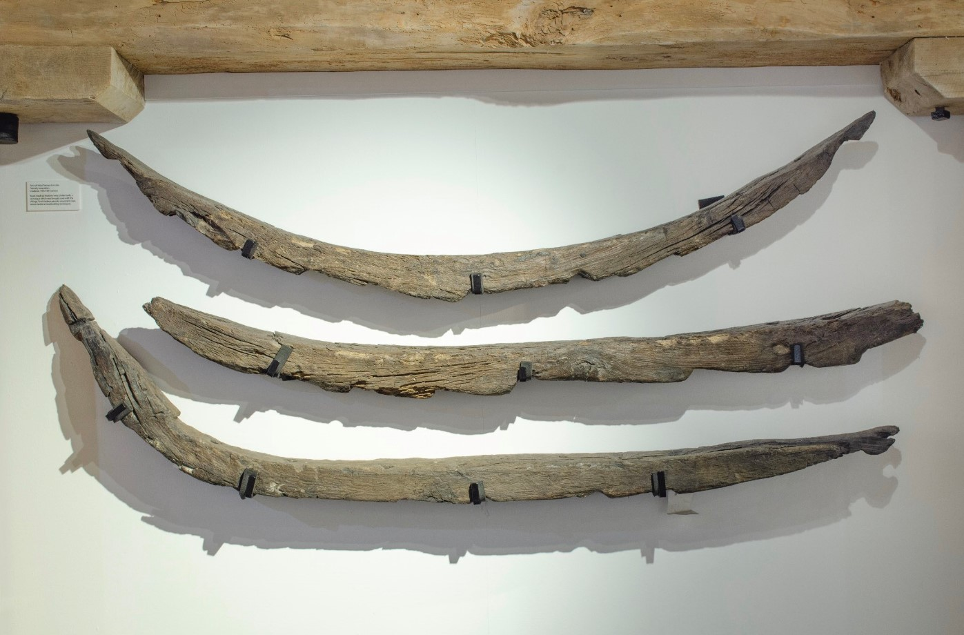 Timbers recovered from the medieval boatyard